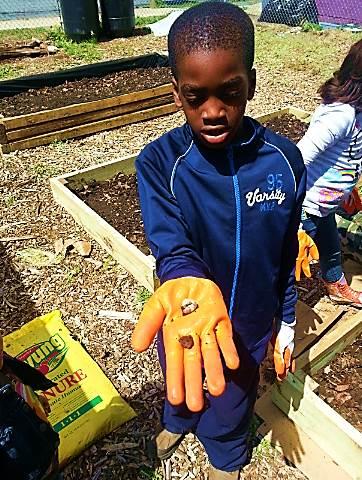 3 Beez Kids Farming